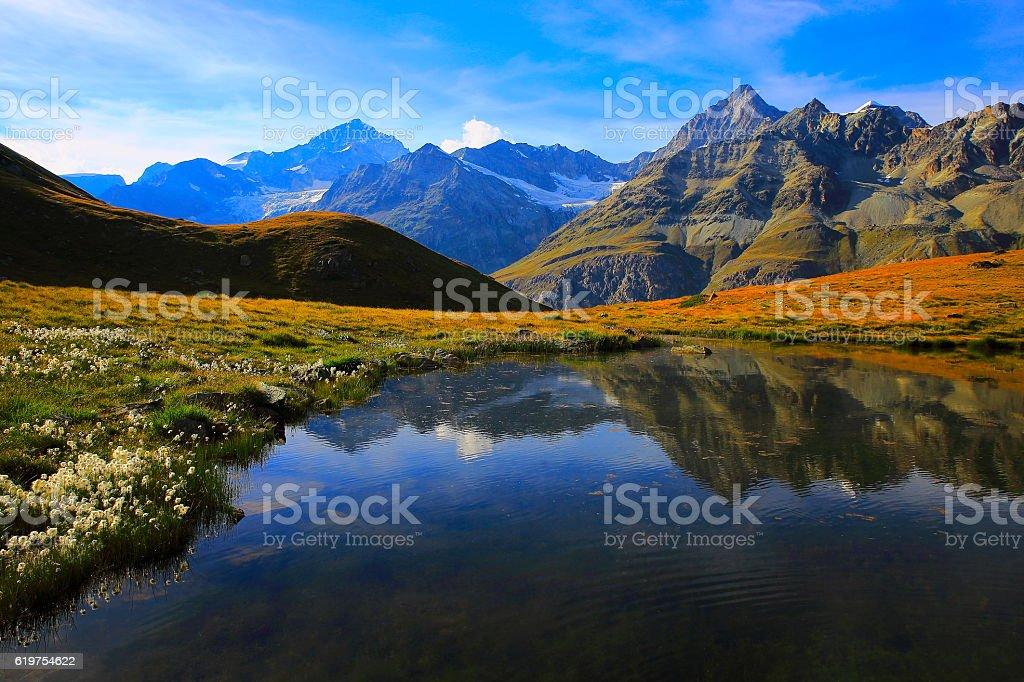 Lake mirrored swiss alps reflection, cotton wildflowers Field, Zermatt stock photo