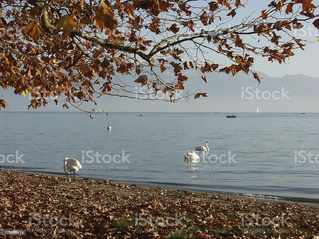 Lake of Geneva stock photo