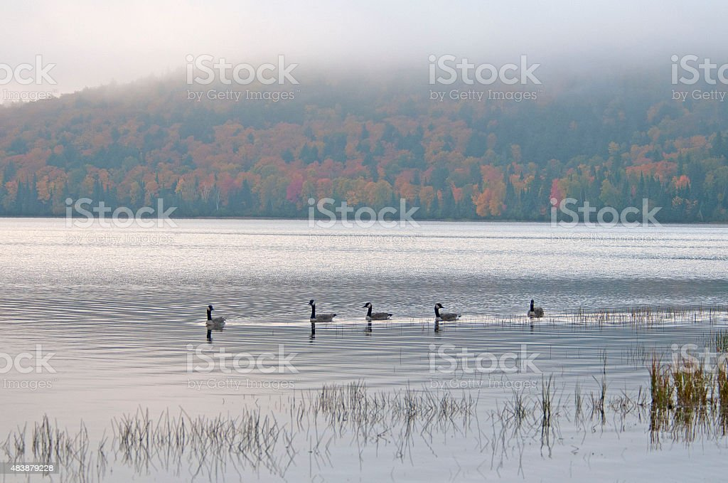 Lake of Two Rivers, Alconquin parc Canada stock photo