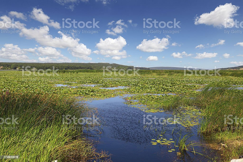 Lake of water- lotus royalty-free stock photo