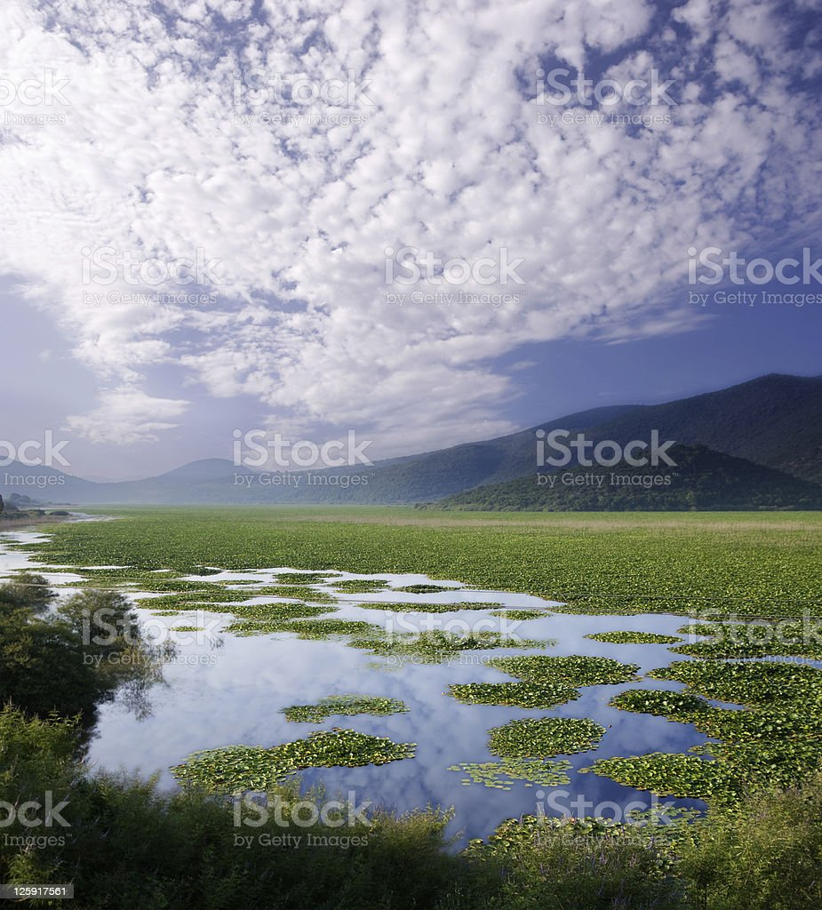 lake of water-lilies stock photo