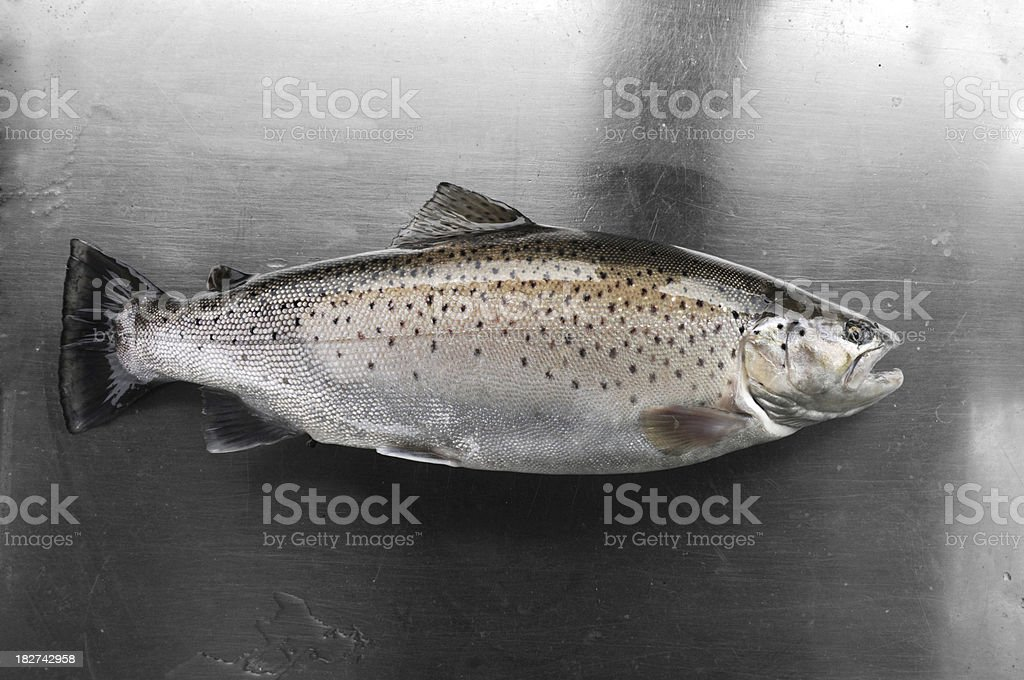 Lake Ontario Brown Trout Before Filleting royalty-free stock photo