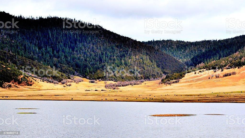 Lago  foto stock royalty-free