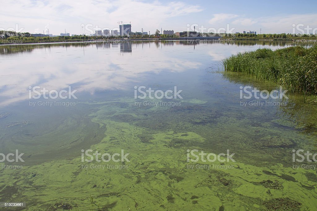 Lake Pollution stock photo