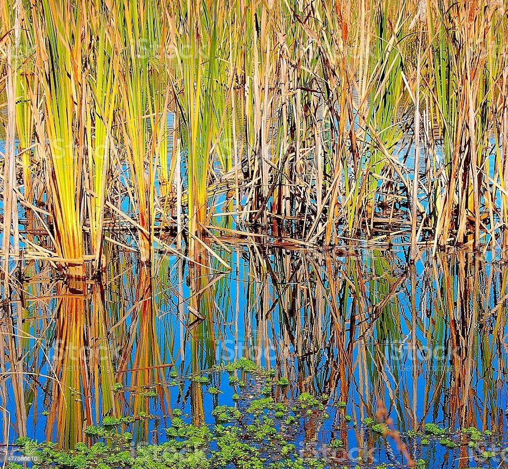 Lake stroikiem zbiór zdjęć royalty-free