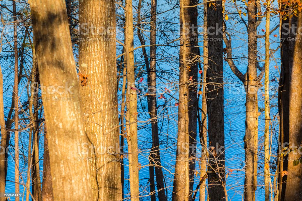 Lake seen from behind trees stock photo