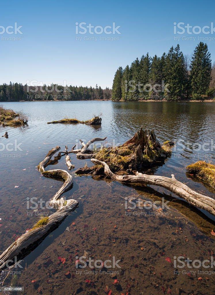 Lake shore scenics stock photo