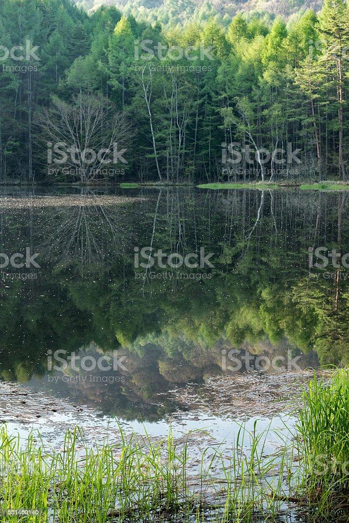 Lake spring in Japan stock photo