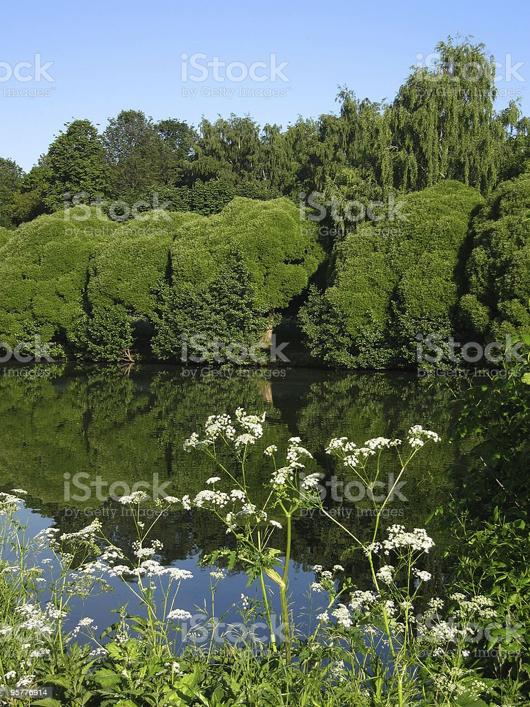 Lake, summer stock photo