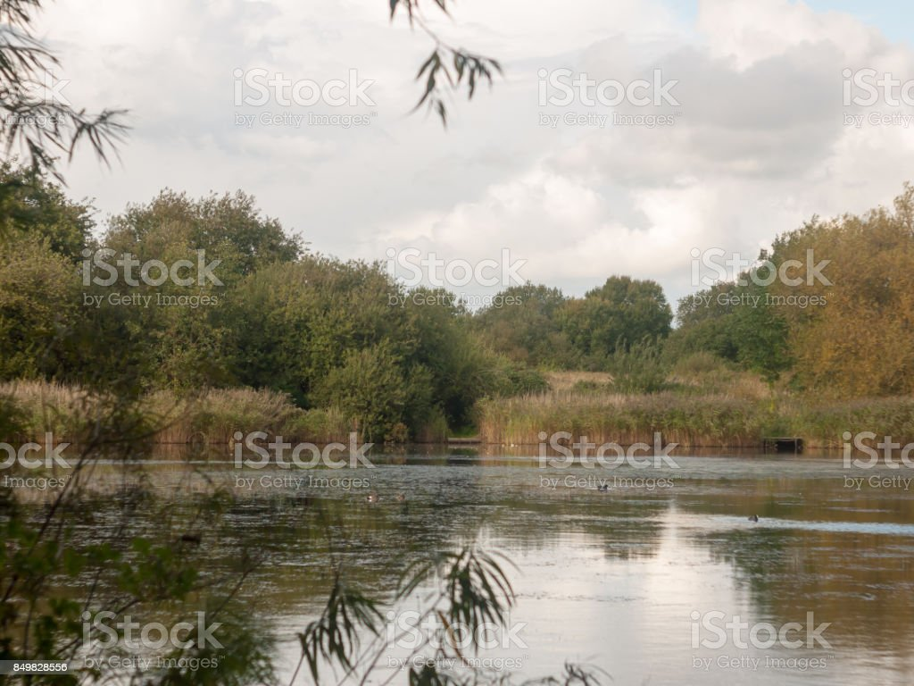 lake surface scene outside end of summer with ducks stock photo