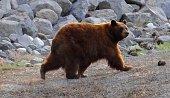 Lake Tahoe Casino Bear