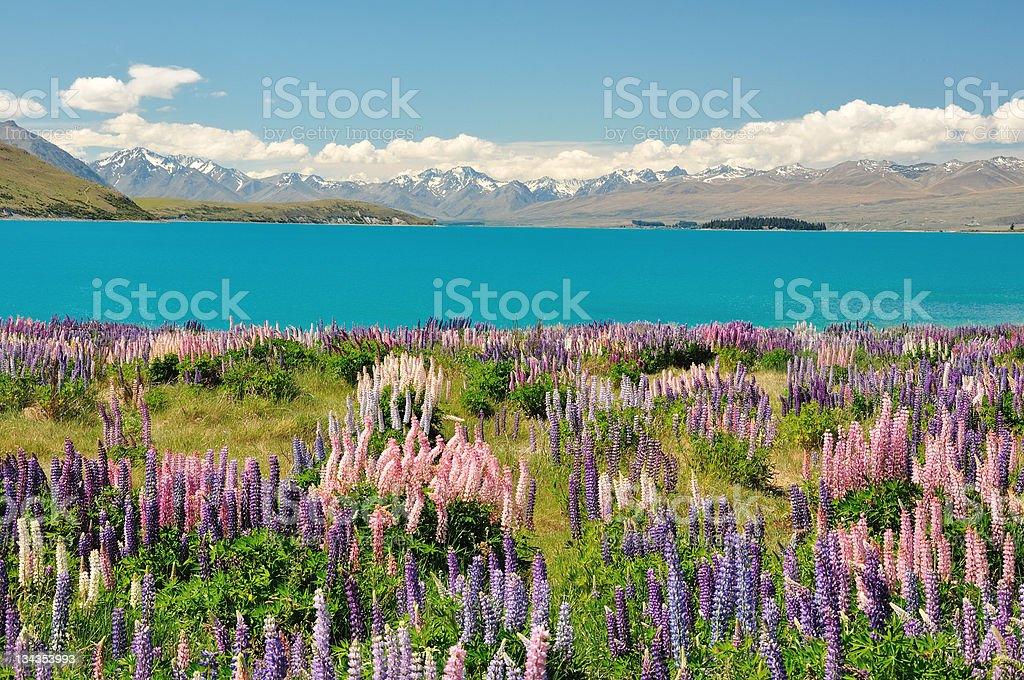Lake Tekapo, New Zealand royalty-free stock photo