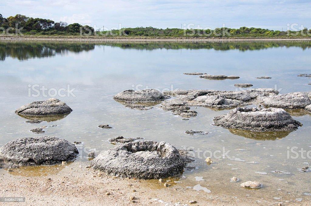Lake Thetis Landscape: Western Australia stock photo