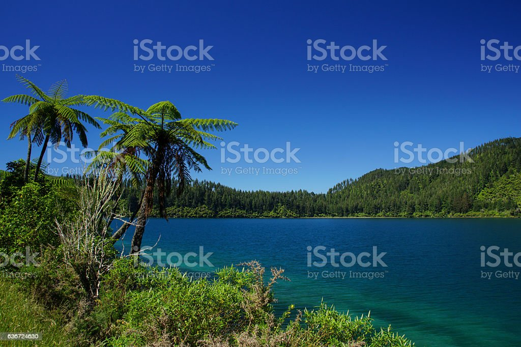 Lake Tikitapu (Blue Lake) near Rotorua New Zealand stock photo