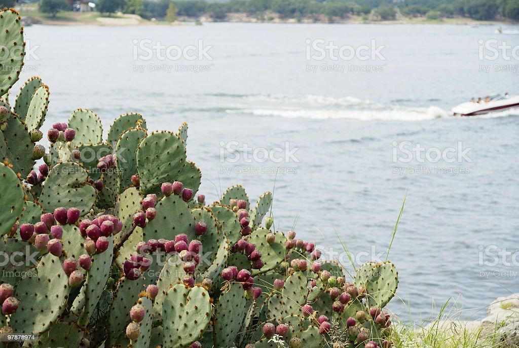 Lake Travis royalty-free stock photo