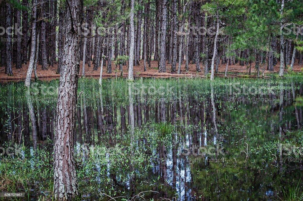 Lac arbres photo libre de droits