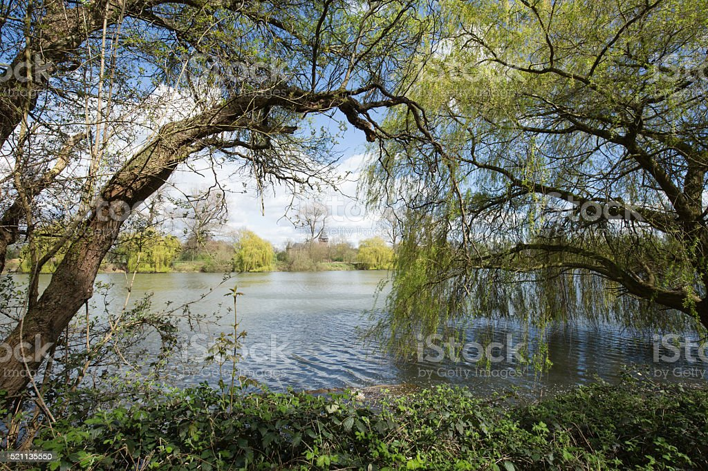 Lake View with trees stock photo