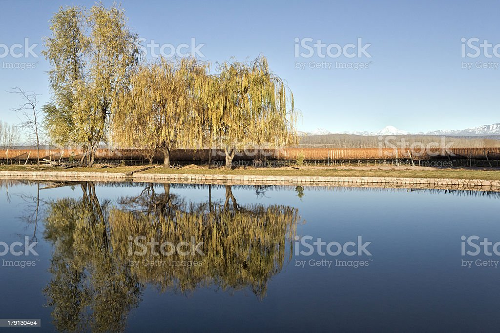 Lake, vineyard and mountain royalty-free stock photo