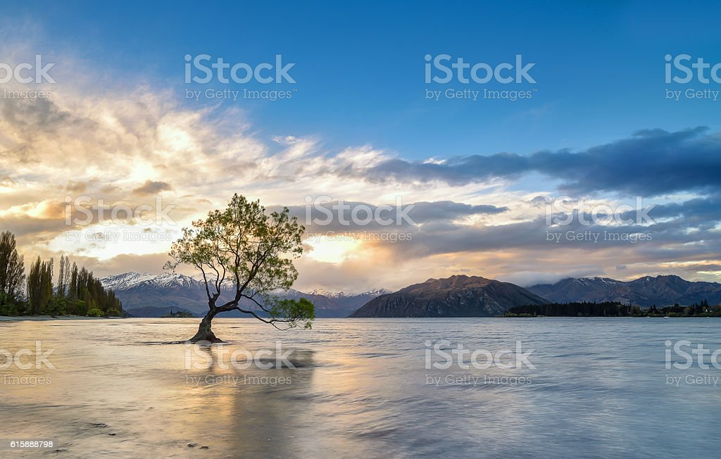 Lake Wanaka on sunset, wanaka tree New Zealand stock photo