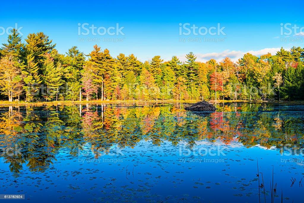 Lake with Beaver Lodge in Autumn in Muskoka Ontario Canada stock photo