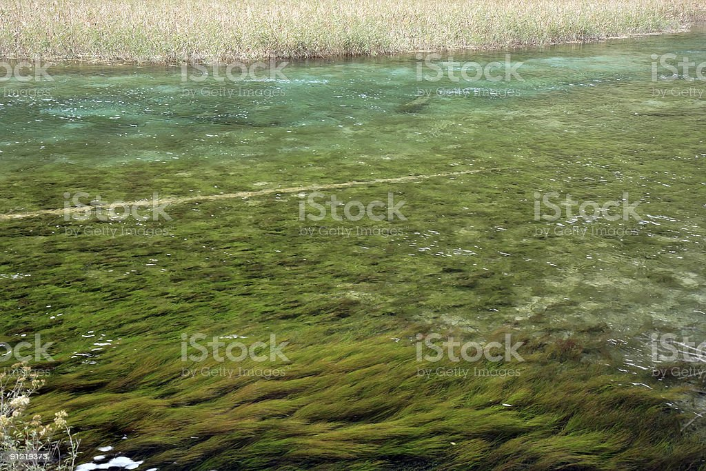 Lake with reeds and waterweeds stock photo