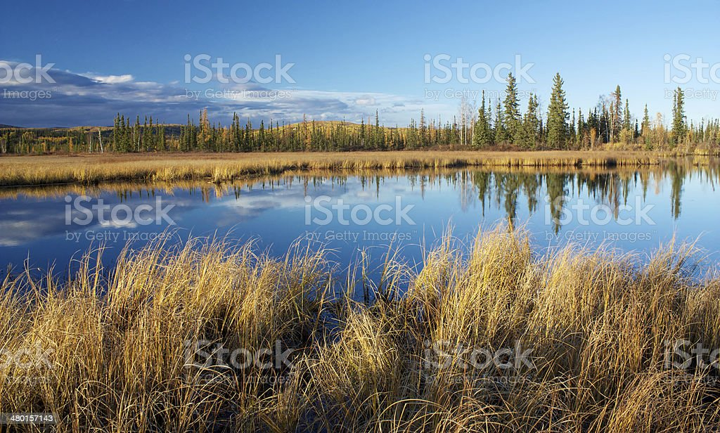 Lake with reflection of dry yellow grass and trees stock photo