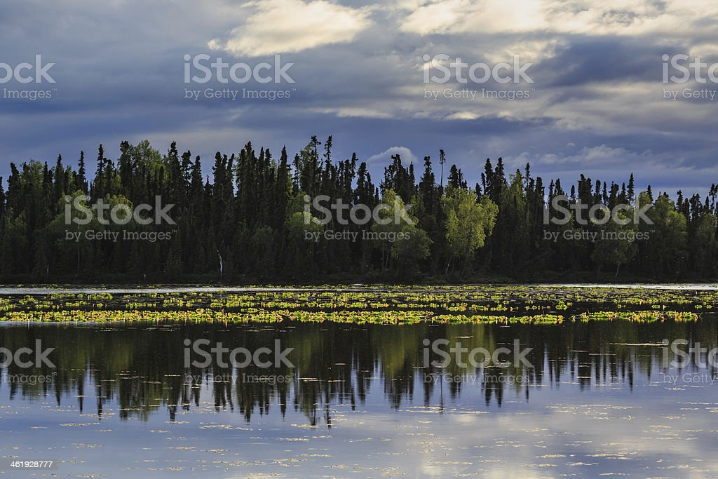 Lake with reflection of trees and lily pads in Alaska stock photo