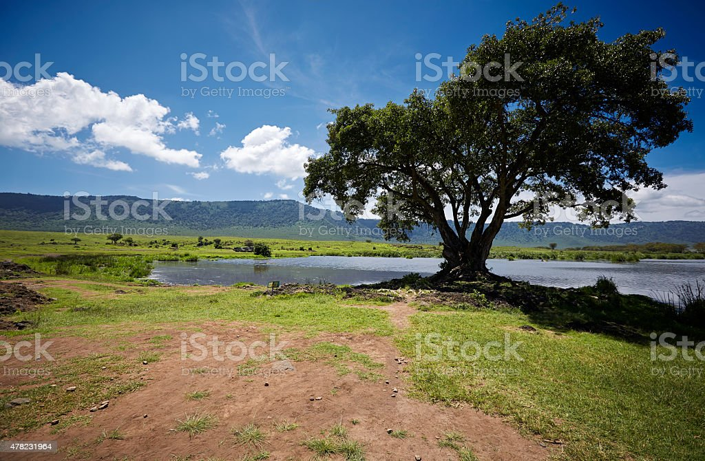 Lake with tree overview in the Ngorongoro crater. stock photo