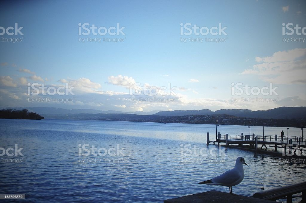 Lake Zurich with Gull royalty-free stock photo