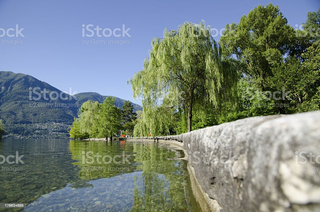 Lakefront with trees royalty-free stock photo