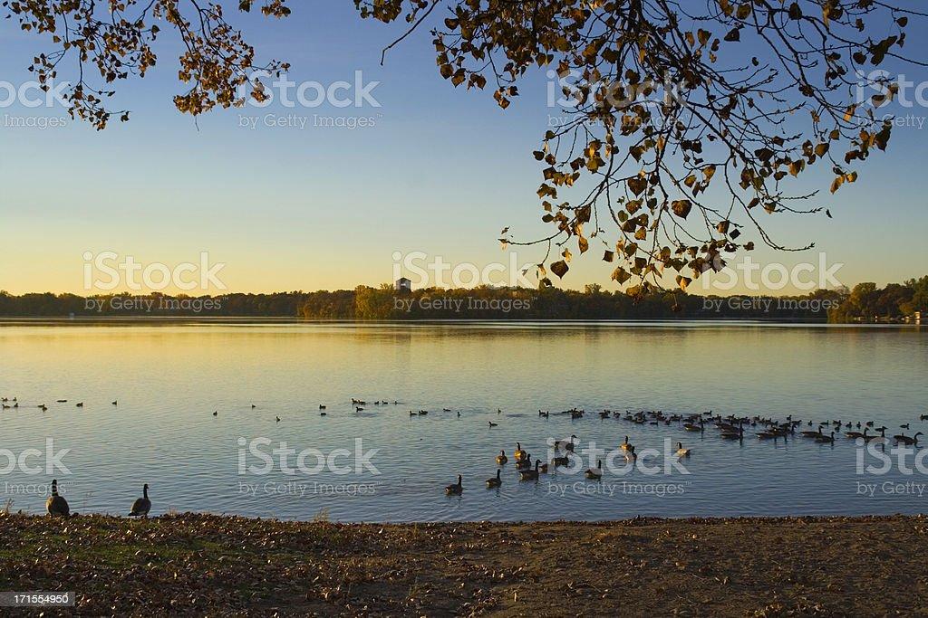 Lakeshore Morning royalty-free stock photo