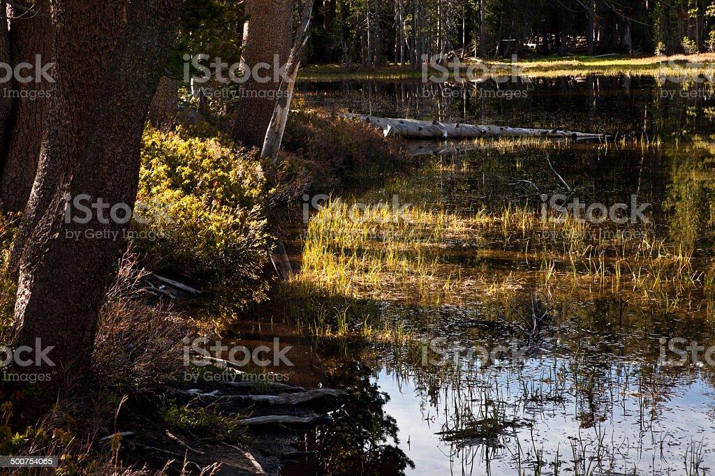 Lakeside Fauna stock photo