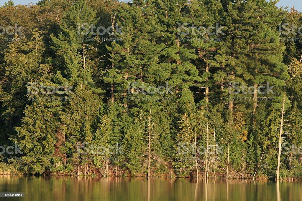 Forêt de Lakeside photo libre de droits