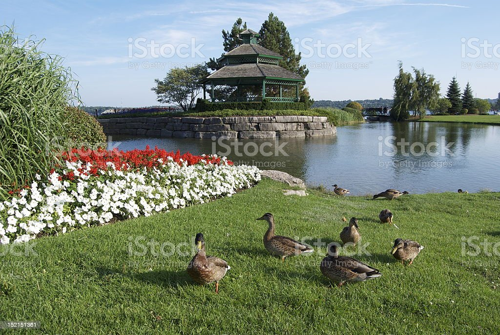 Lakeside Garden in Central Ontario stock photo