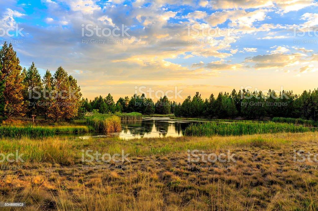 Lakeside Habitat at Sunset stock photo