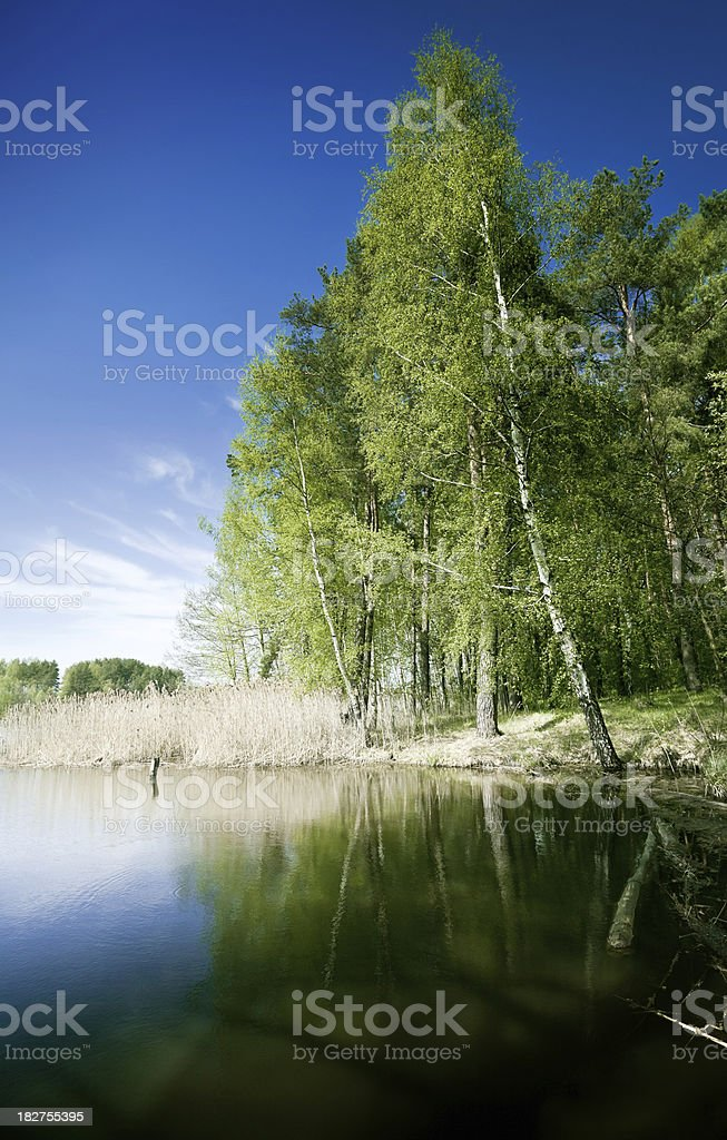 Lakeside in forest stock photo