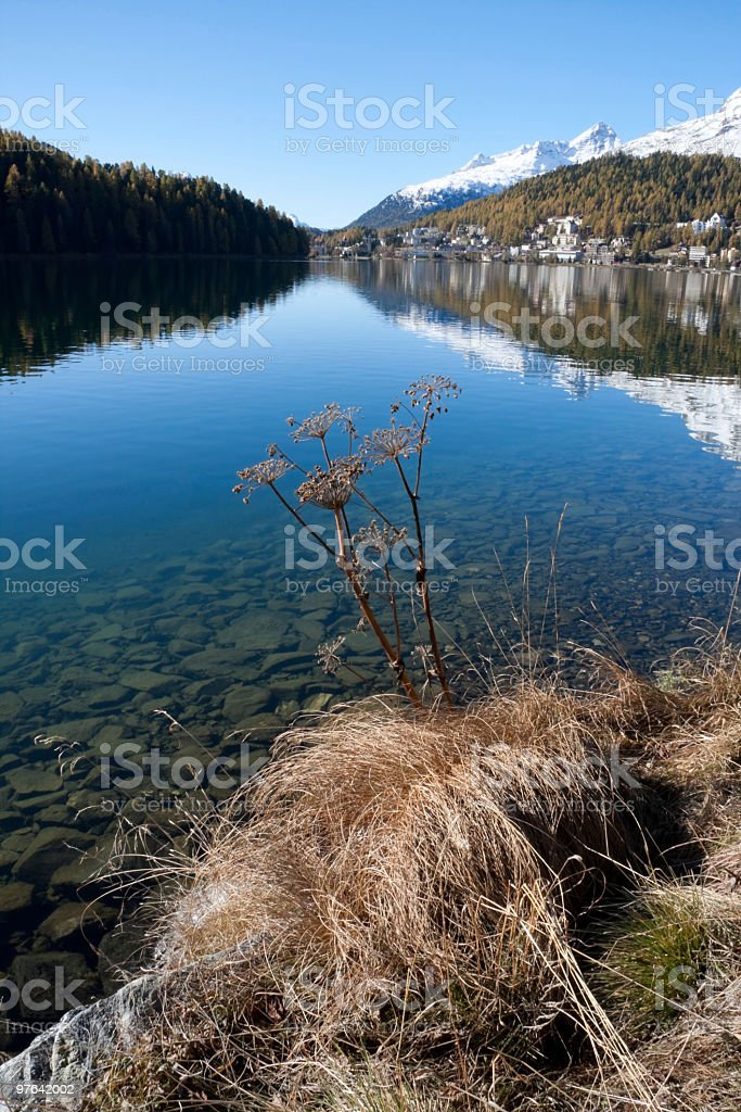 Lakeside St.Moritz: Indian Summer with Snow Mountains and Larchs royalty-free stock photo