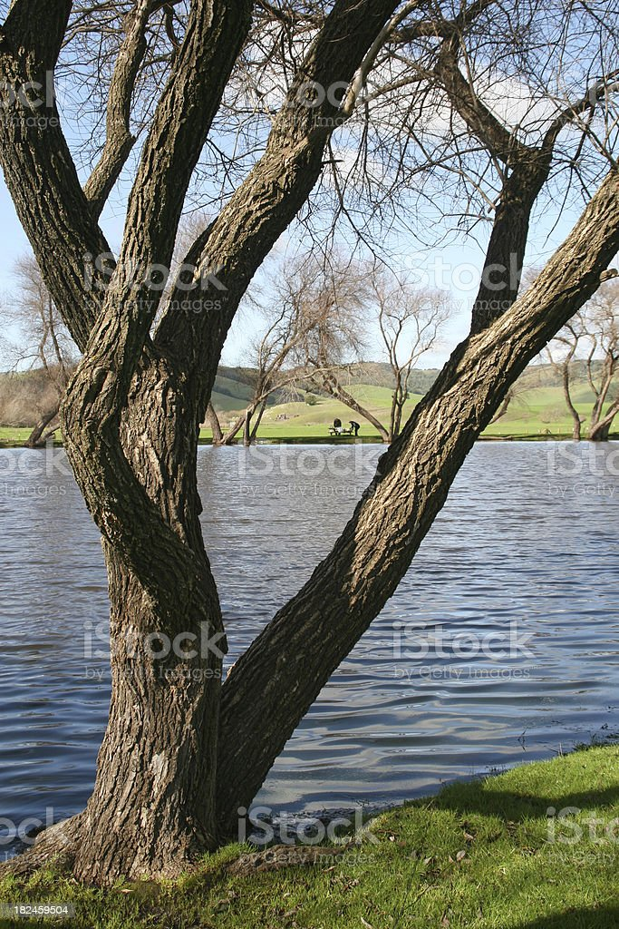 Lakeside Tree royalty-free stock photo