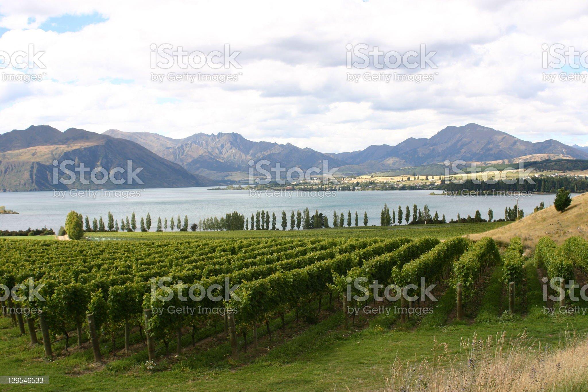 lakeside vineyard royalty-free stock photo
