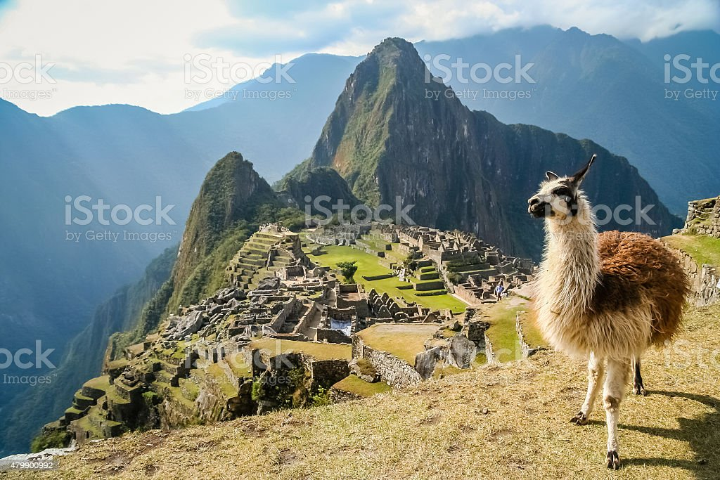 Lama And Machu Picchu stock photo