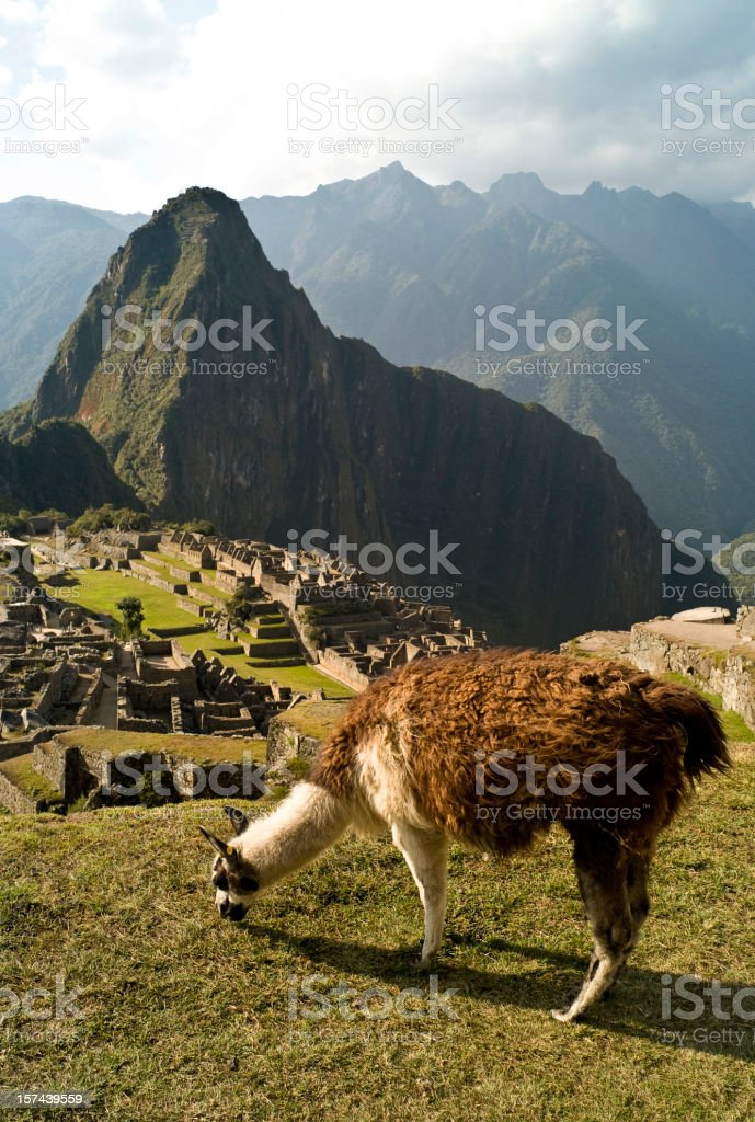 Lama of Machu Picchu royalty-free stock photo
