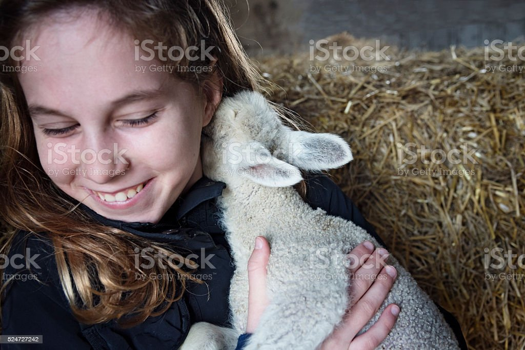 Lamb Nuzzling the Neck of a Young Girl. stock photo