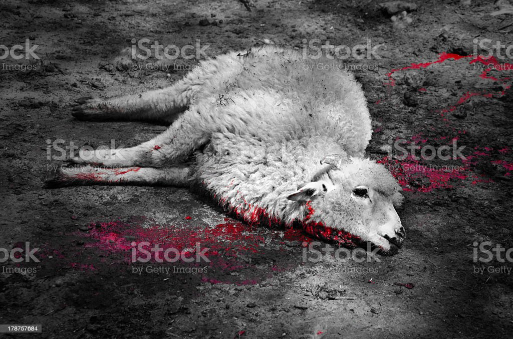 Lamb of God  in a blood bath stock photo