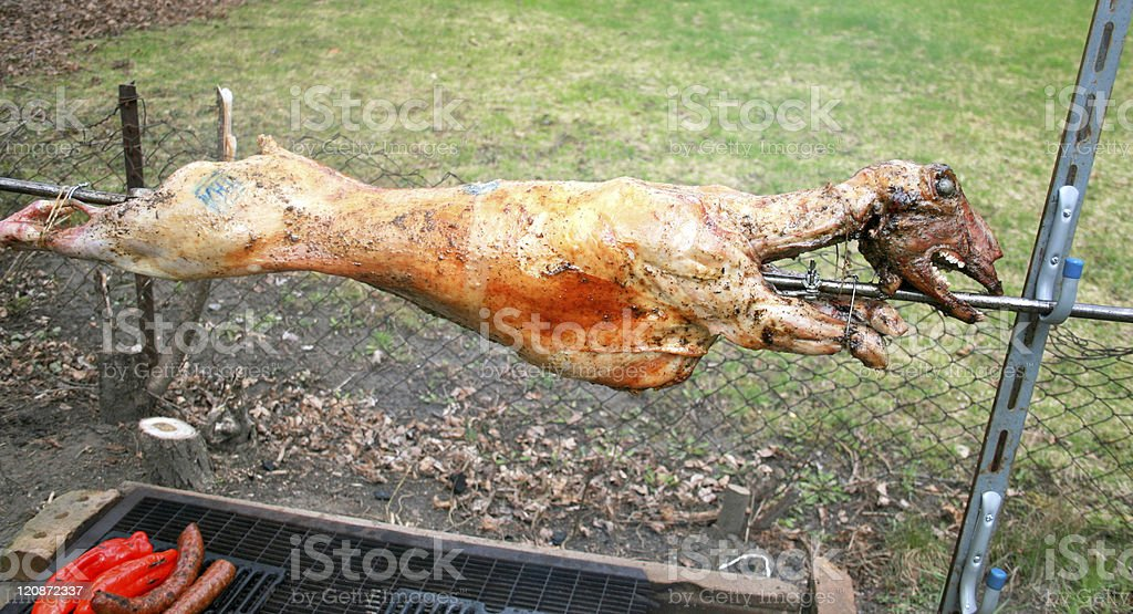Lamb roasting on a spit stock photo
