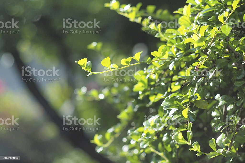 Lambent leaves stock photo