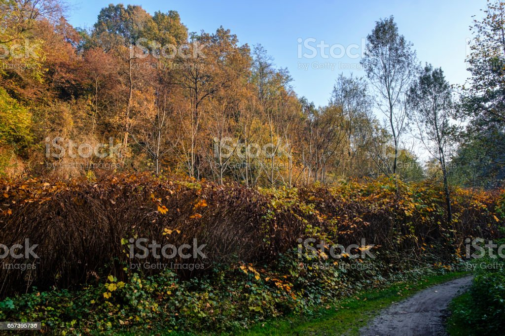 Lambro valley (Brianza, Italy) at fall stock photo