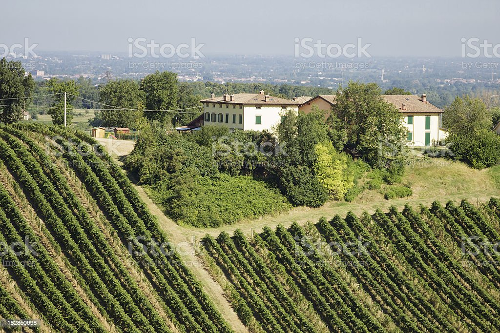 Lambrusco vineyard in Castelvetro di Modena. Italy. royalty-free stock photo