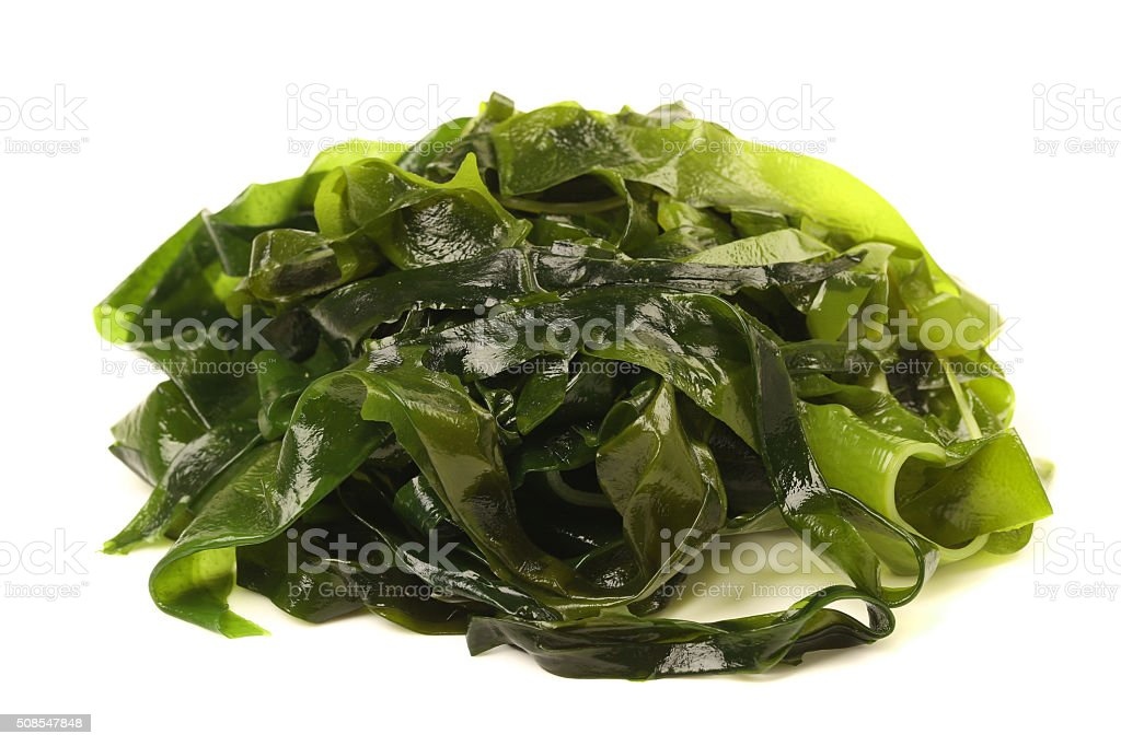 Laminaria (Kelp) Seaweed Isolated on White Background stock photo