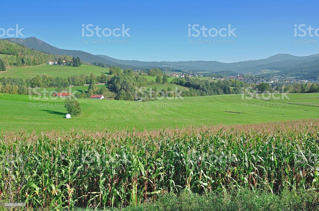 Lam,Lamer Winkel,bavarian Forest,Germany stock photo
