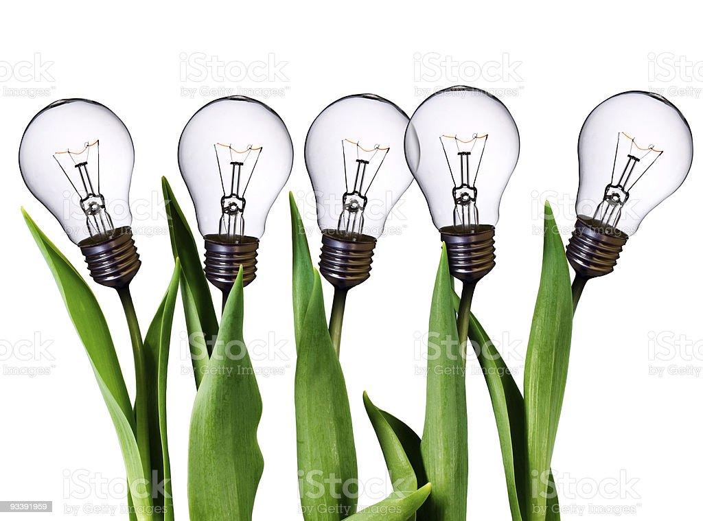 lamp bulb tulips stock photo